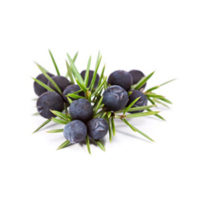 Hermit_Dutch-Coastal-Gin_Botanicals_Juniper_01_300x300